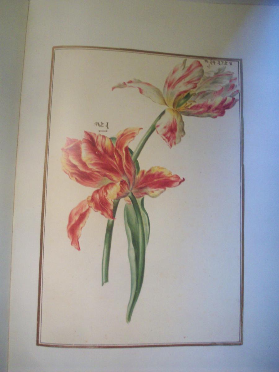 karlsruher tulpenbuch eine handschrift der bad. Black Bedroom Furniture Sets. Home Design Ideas